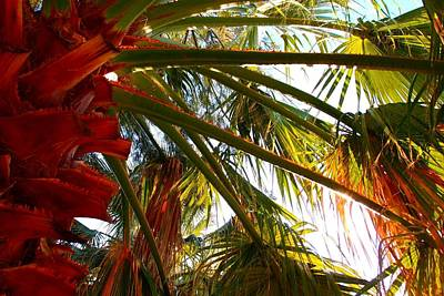 Photograph - Branches Of The Palm Tree 02 by Dora Hathazi Mendes