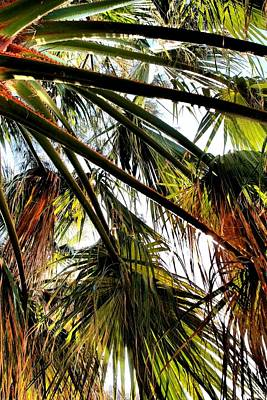 Photograph - Branches Of The Palm Tree 04 by Dora Hathazi Mendes