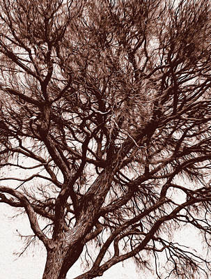 Painting - Branches Of Time by Andrea Mazzocchetti