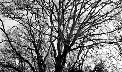 Photograph - Branches Of Wisdom by Teri Schuster