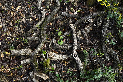 Photograph - Branches On Forest Floor by Perry Van Munster