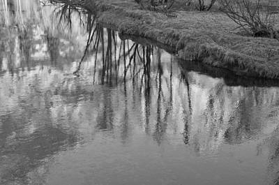 Photograph - Branches Reflected by Priya Ghose