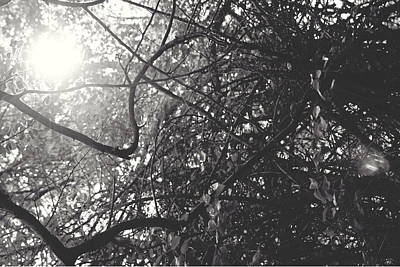 Photograph - Branches by Sarah Boyd