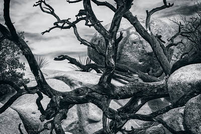 Photograph - Branches Series 9150697 by Sandra Selle Rodriguez