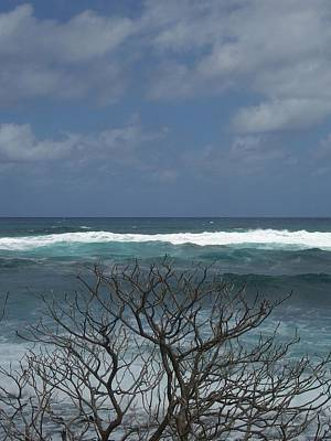 Photograph - Branches Waves And Sky by Michelle Miron-Rebbe
