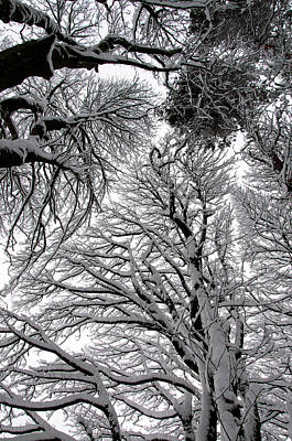 Branches With Snow Art Print by Mark Denham