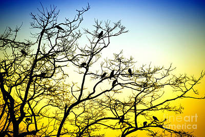 Photograph - Branches by Yew Kwang