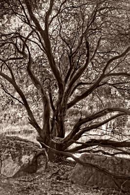 Photograph - Branching Majesty by Leda Robertson