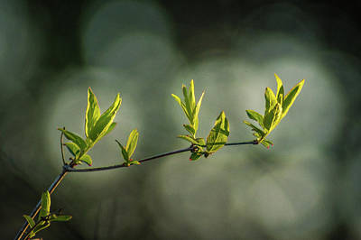 Photograph - Branching Out by Bill Pevlor