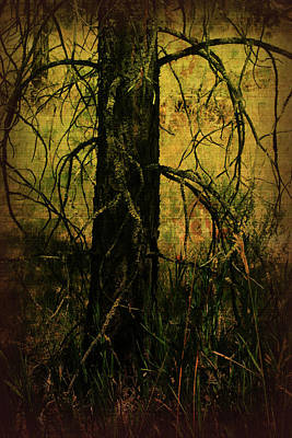 Tree Art Mixed Media - Branching Out by Bonnie Bruno