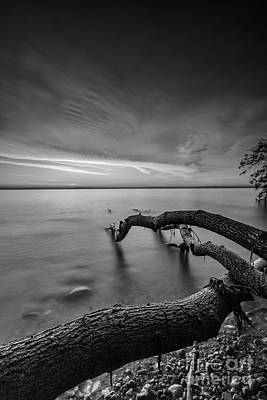 Photograph - Branching Out - Bw by Andrew Slater