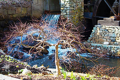 Jenny Grist Mill Photograph - Branching Out by Don Lonergan