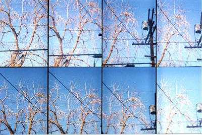 Blue And Brown Photograph - Branching Out by Graphics Metropolis