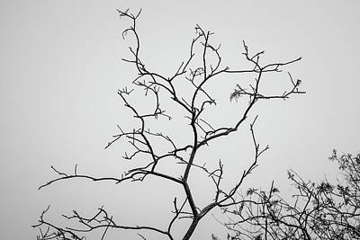 Photograph - Branching Out I Bw by David Gordon