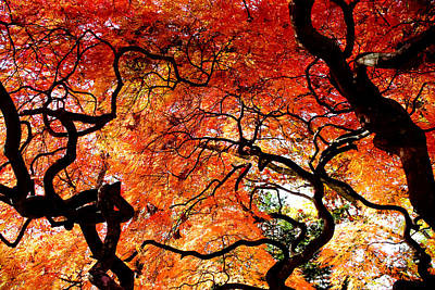 Photograph - Branching Out - Japanese Red Maple by Colleen Kammerer