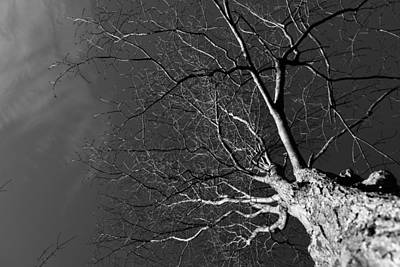 Photograph - Branching Out by Robert McKay Jones