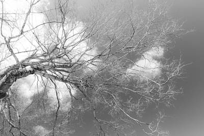 Photograph - Branching Out by Sara Hudock