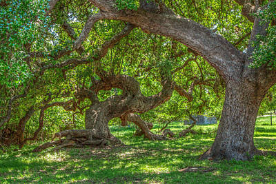 Lyndon Photograph - Branching Out by Tom Weisbrook