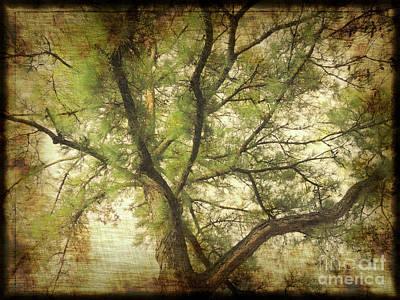 Photograph - Branching Upward by Lydia Holly