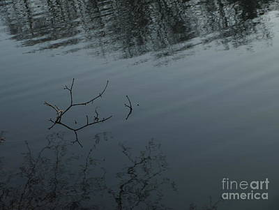 Photograph - Branchreflect by Mary Kobet