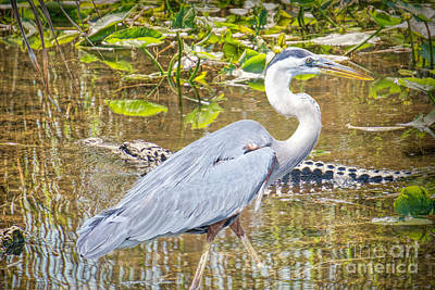 Photograph - Brave Heron by Judy Kay
