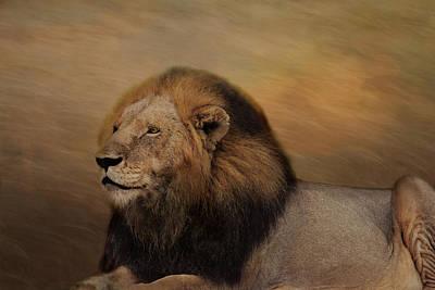 Photograph - Braveheart Lion by Kay Kochenderfer