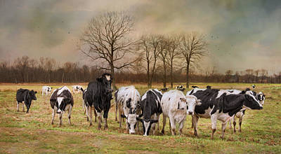 New England Dairy Farms Photograph - Braveheart by Robin-Lee Vieira