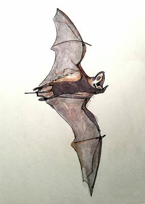 Brazilian Free-tailed Bat Art Print
