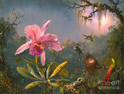 Photograph - Brazilian Orchid And Hummingbirds 1871 by Padre Art