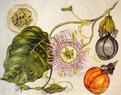 Brazilian Passion Fruit             Passiflora Ligularis Seme Art Print by Sandra Phryce-Jones