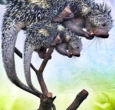 Photograph - Brazilian Porcupine   by Susan Garren