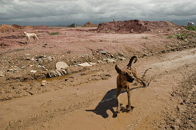 Photograph - Brazilian Stray Dogs by Colleen Joy