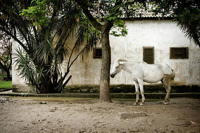 Photograph - Brazilian Stray Horse by Colleen Joy