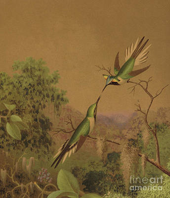 Hummingbird Painting - Brazlilian Hummingbirds Iv by Martin Johnson Heade