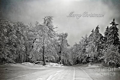 Snowy Trees Digital Art - Break In The Storm Christmas Card by Lois Bryan
