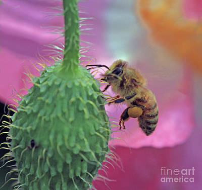 Poppy Wall Art - Photograph - Break Time by Gary Wing