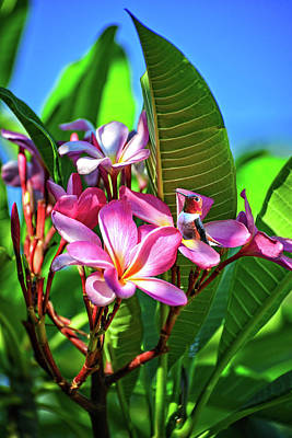 Photograph - Break Time In The Plumeria by Lynn Bauer