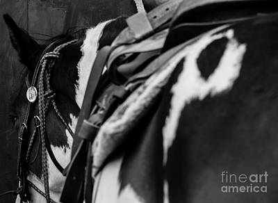 Horse Photograph - Break Time by Jamie Haley