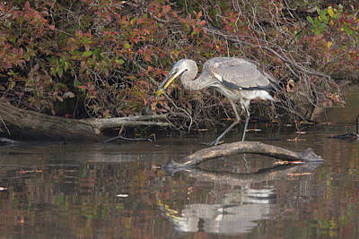 Belmont Lake State Park Wall Art - Photograph - Breakfast At Belmont Lake by Joan D Squared Photography