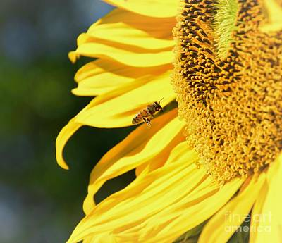 Photograph - Breakfast Bee by Angela J Wright