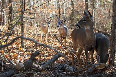 Photograph - Breakfast In The Woods by Bill Stephens