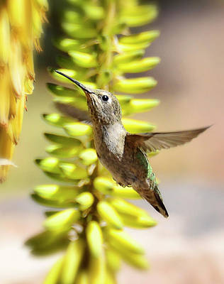 Photograph - Breakfast Time Hummer Style  by Saija Lehtonen