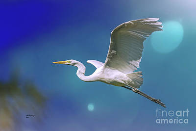 Photograph - Breakin Dawn Flyer-the Great Egret by Bill And Deb Hayes