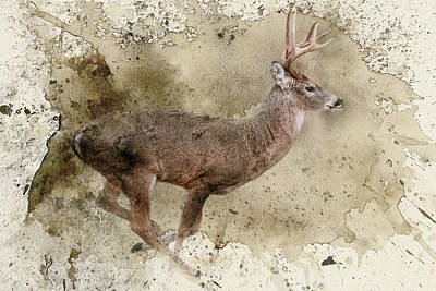 Photograph - Breaking Limits Deer Art by Jai Johnson