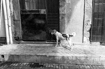 Perros Photograph - Breaking Out In Casco Viejo Mono by John Rizzuto
