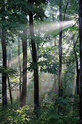 Photograph - Breaking Through The Canopy by Kristin Elmquist