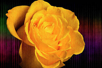 Photograph - Breaking Up Rose 5530.02 by M K Miller