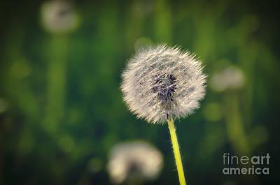 Breath Art Print by Alessandro Giorgi Art Photography