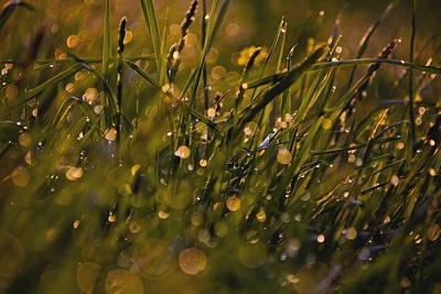 Breath Of Rain Art Print by Everett Houser