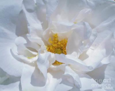 Photograph - Breathe  by Jacquelinemari